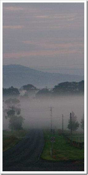 Liliydale Fog