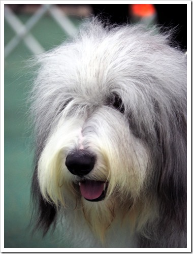 Kcc Park Skye Dog Show