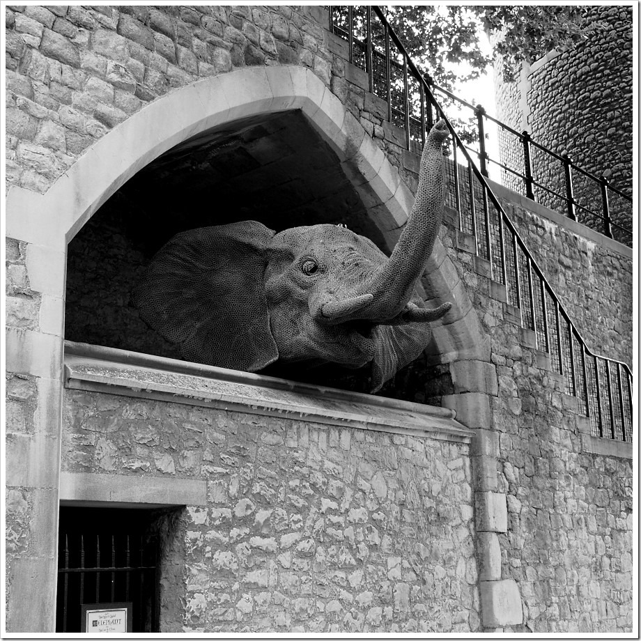 Tower of London Menagerie 2