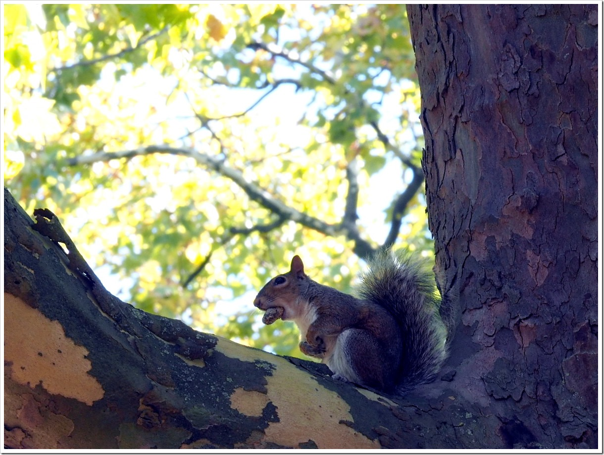 Autumn Squirrel 4